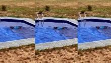ცურვისგან ბედნიერი!!!